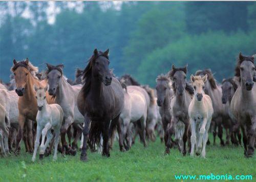 ცხენების რემა